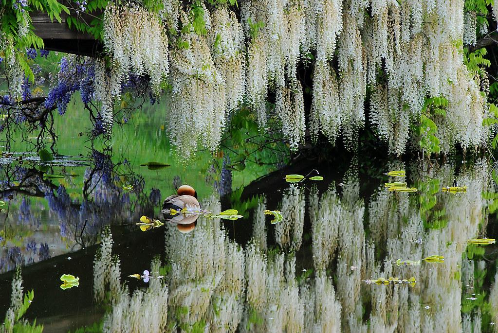 Jardin De Reve Clarens 18 05 2014 Paudex Yves Flickr