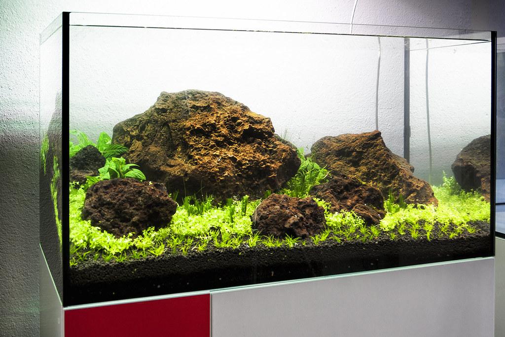 different view of concept80 planted aquarium filipe oliveira flickr