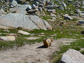 There are THREE marmots in this picture!!! | by snackronym