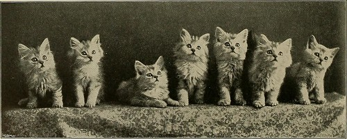 "Image from page 113 of ""Our domestic animals, their habits, intelligence and usefulness;"" (1907) 