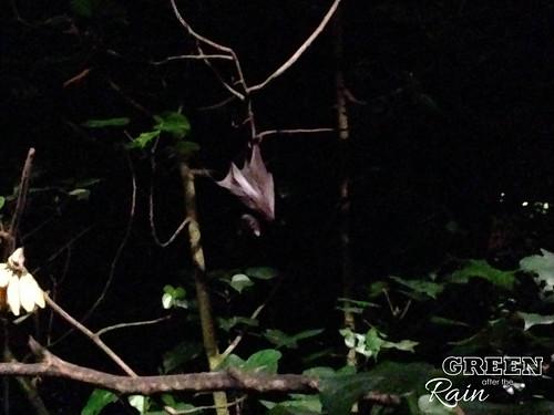 160912f Singapore Night Safari _035
