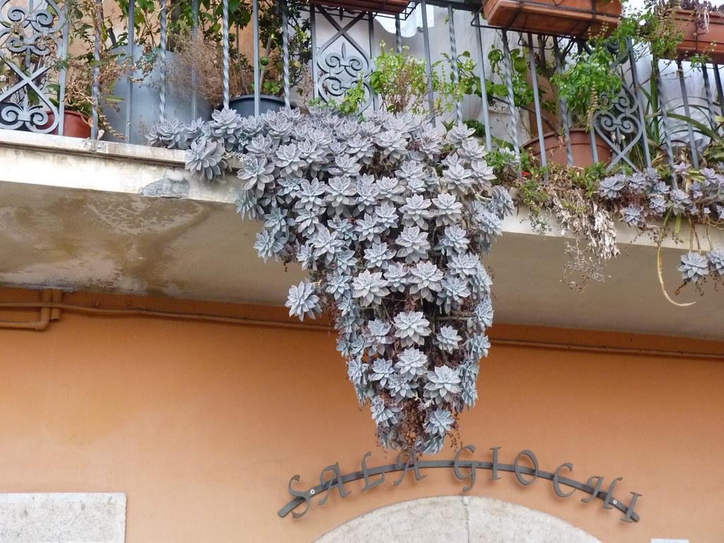 Veroli (Fr) - Le piante grasse nel balcone sopra la sal gi…  Flickr