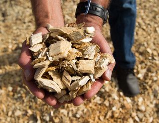 handful of biomass | by #ODF