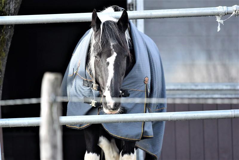 Horses 07.03 (4)