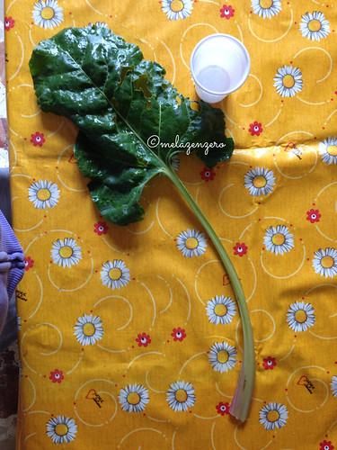 Giri selvatici o bieta (beta vulgaris)
