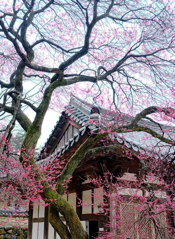 Korea: Hwaeomsa Temple