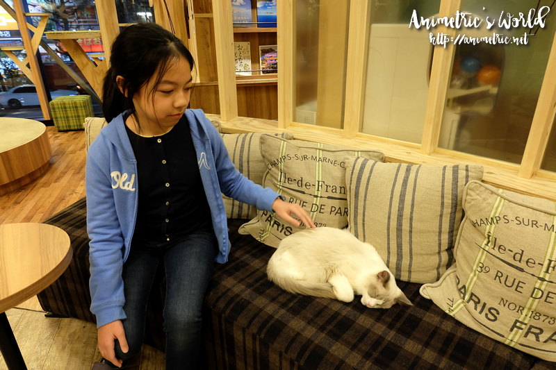 Cat Cafe Mocha Akihabara Japan