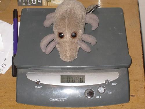 Mite Weight