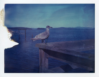 By the Sea - Day 4 Polaroid Week | by Ashley E. Moore