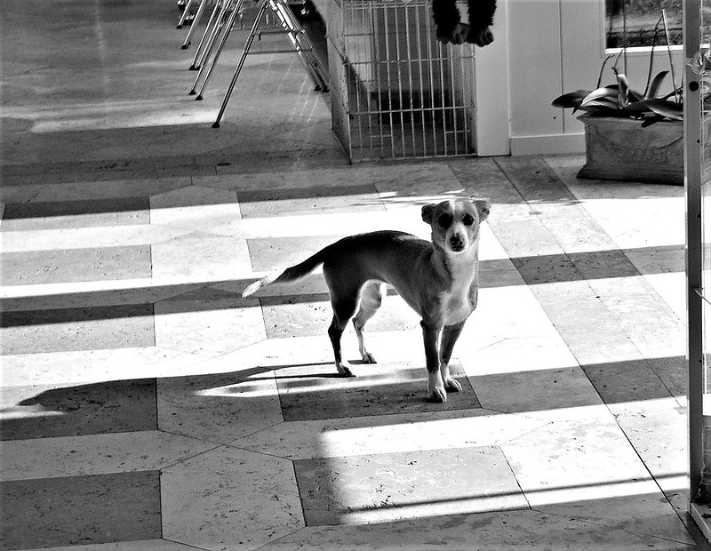 Dog at vet 01.02 (2)