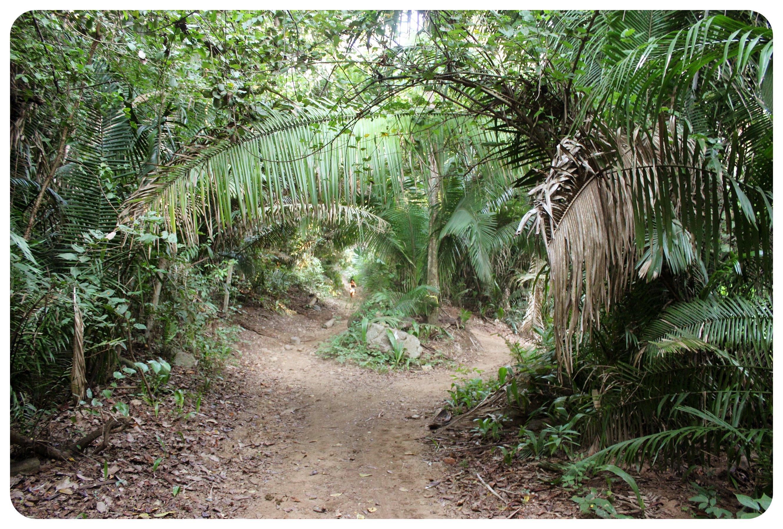 jungle hike to san pancho
