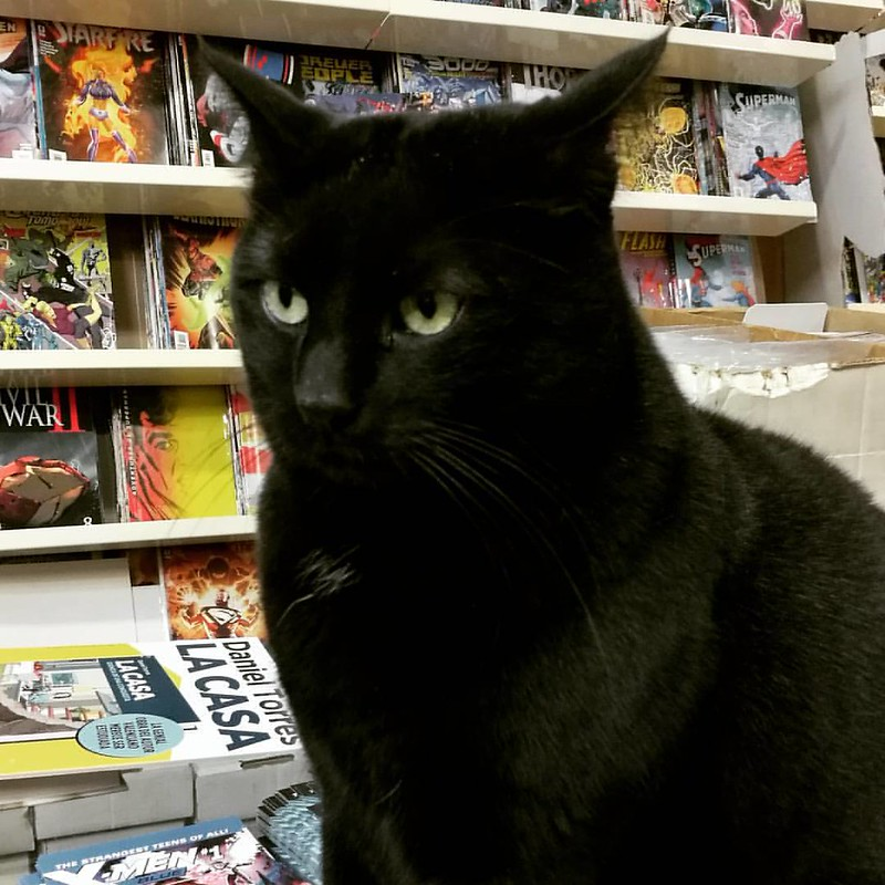 This cute cat was the boss at #gothamcomicsvalencia Great to have met you Sami 💕 #valencia #comic #comics #catsofinstagram #kittycat #blackcat #gato