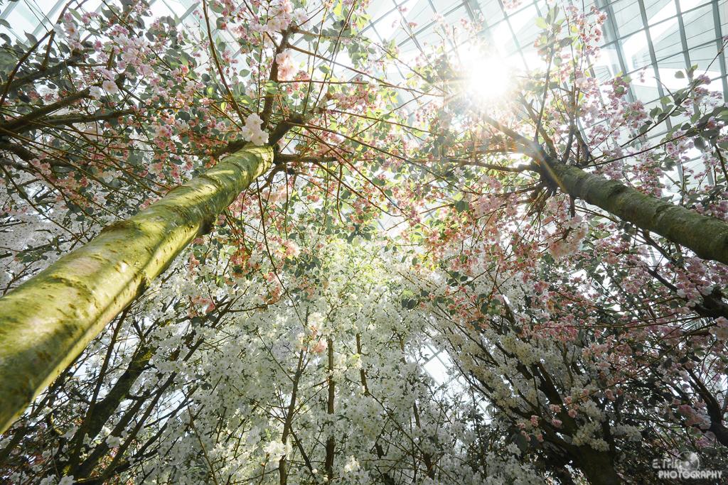 Blossom Bliss - 002