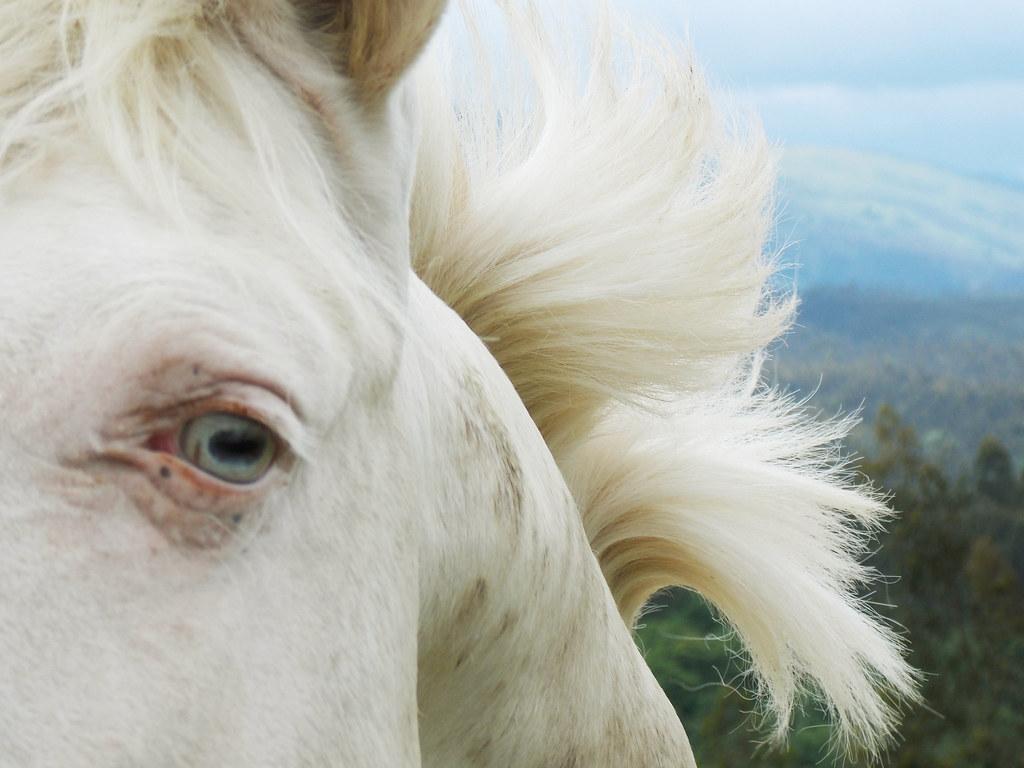 Un Caballo Cremello A Cremello Horse Aunque A Los
