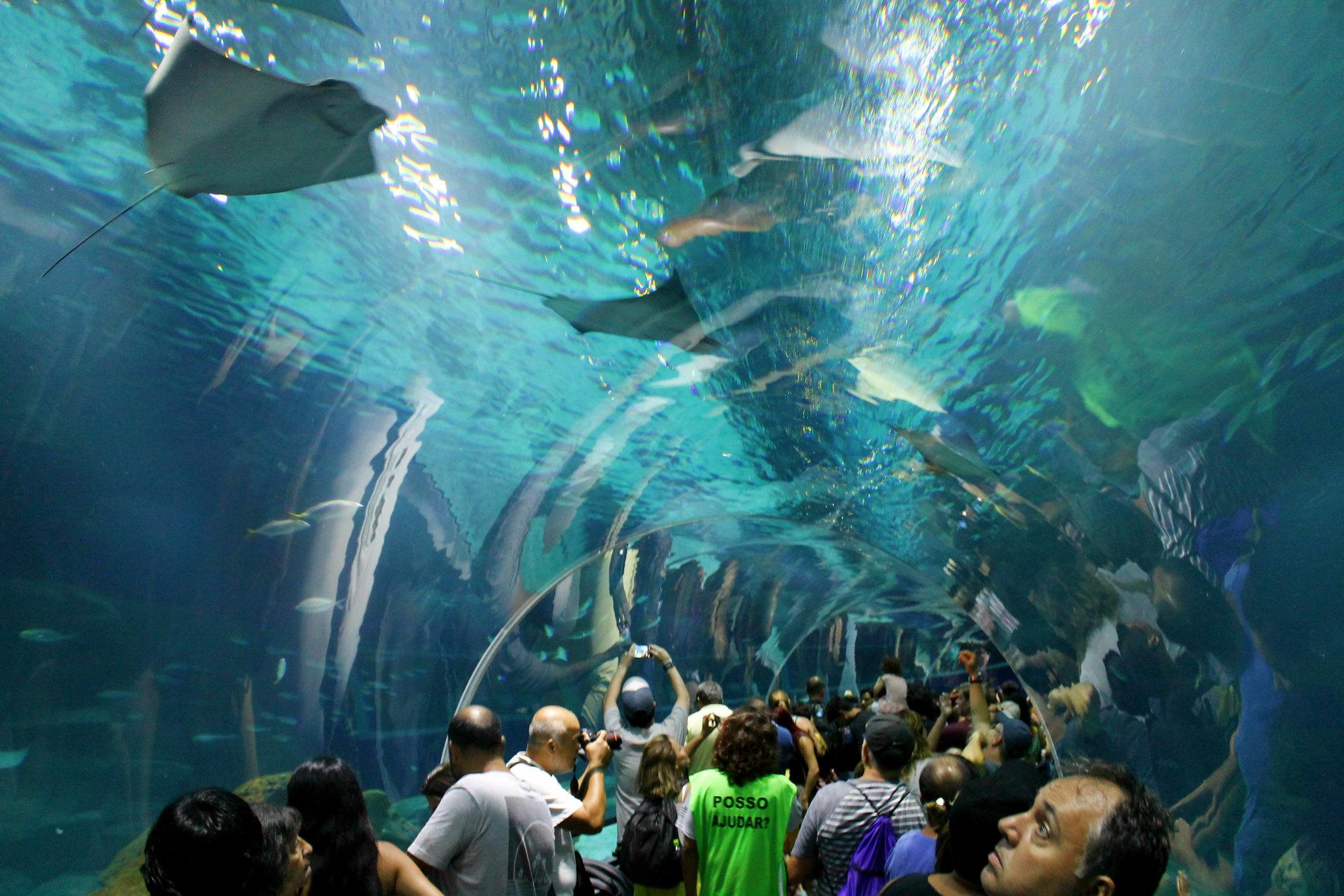 aquario16v2