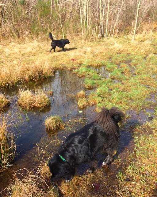 """Hey Maggie, placing the ball several feet away from me in a pool of stagnant water isn't what I meant by """"bring it back"""". 😭"""