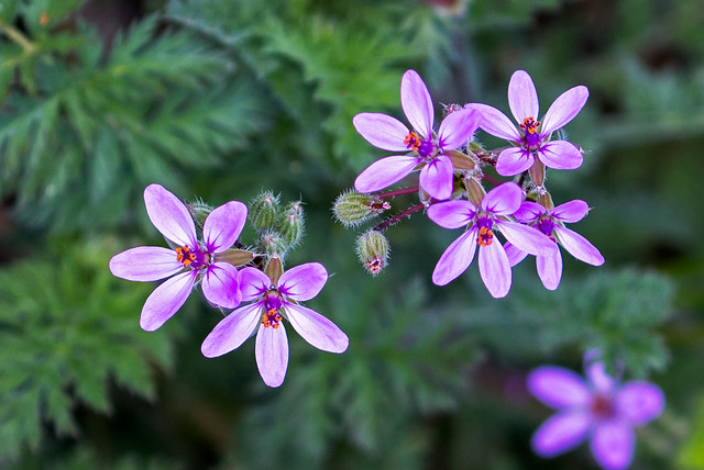 Wild-Flowers-9-7D2-032717
