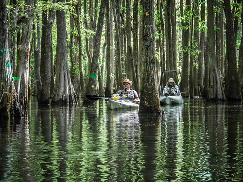 Sparkleberry Swamp-41