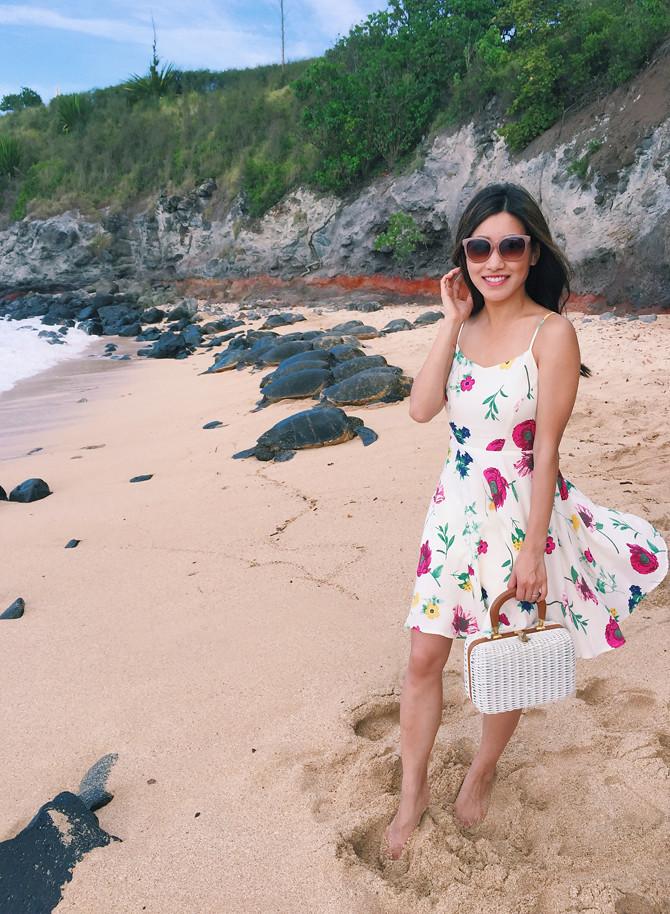 hookipa beach sea turtles maui hawaii