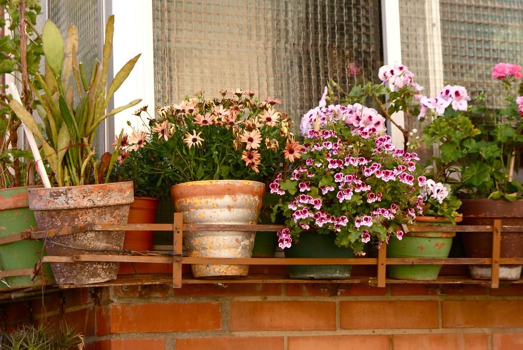 Fleurs en pot sur un balcon du quartier.