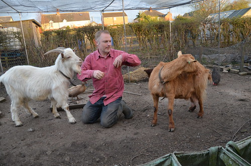 goats April 17 (5)