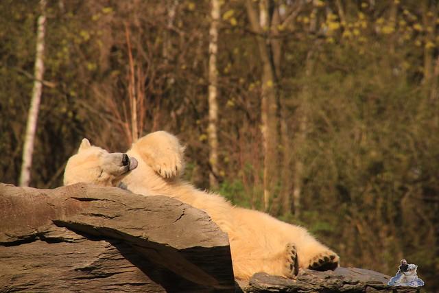 Tierpark Berlin 02.04.2017 202
