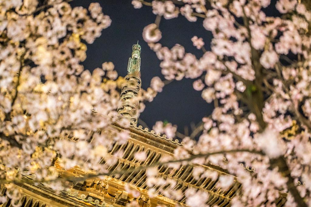 東寺 夜桜ライトアップ