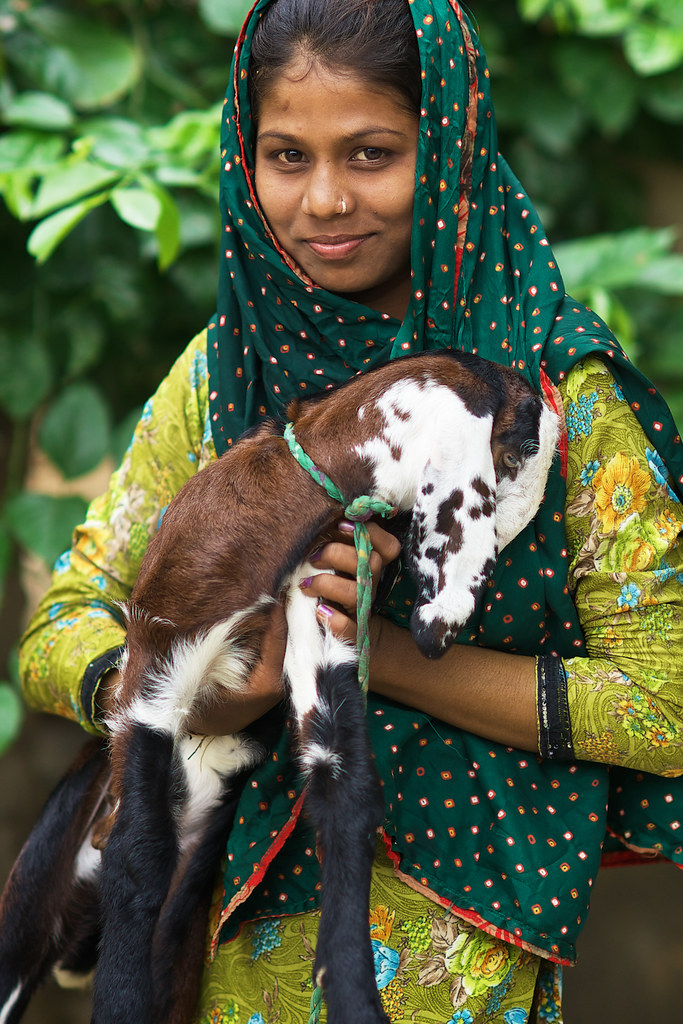 Beautiful Indian Girl Posing With Her Lamb In A Village Ne -1345