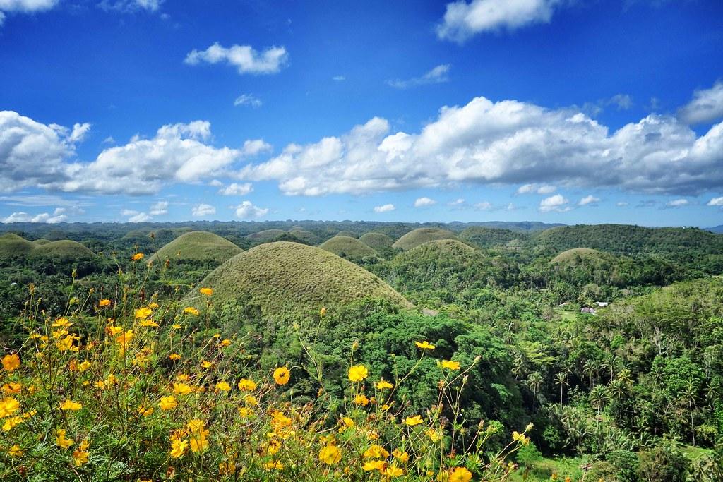 Bohol - Chocolates Hills - Flowers