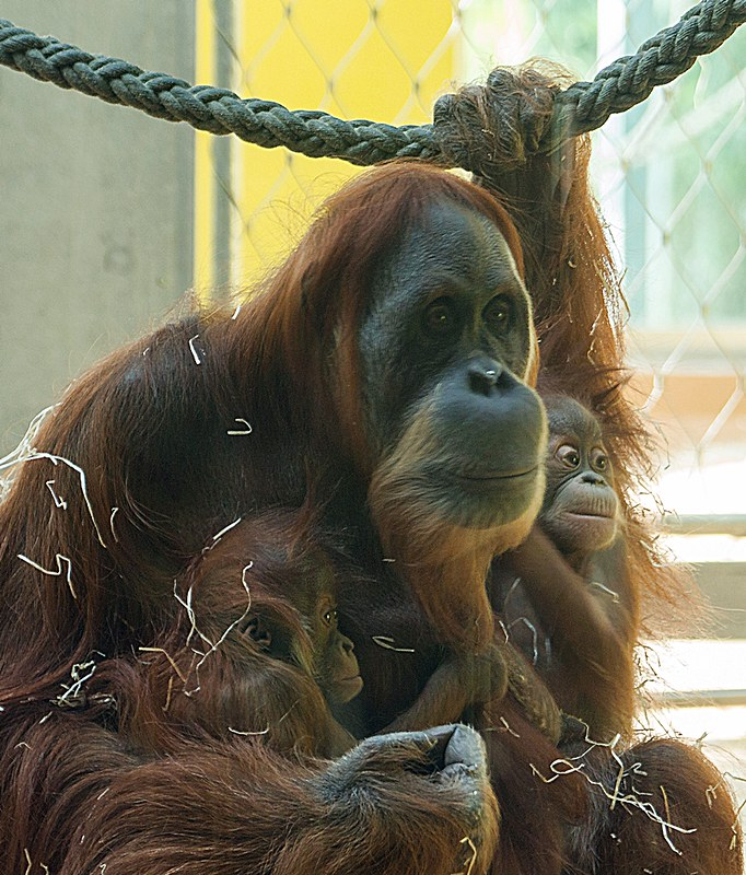 Matra mit ihren Nachwuchs