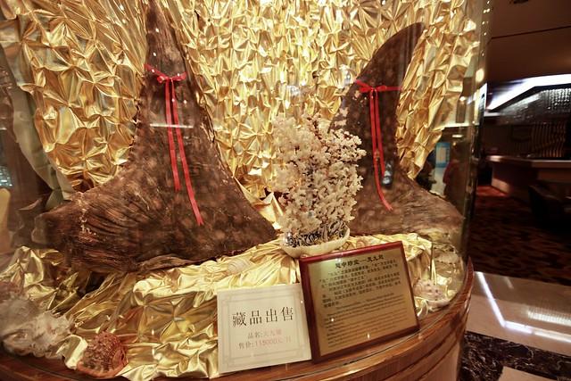 2011.06-中國福建廈門觀光飯店的展售櫥窗-鯨鯊背鰭-天九翅
