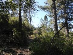 Recherche des bergeries de Vitellile :  la sente d'accès au ruisseau de Vetricciule