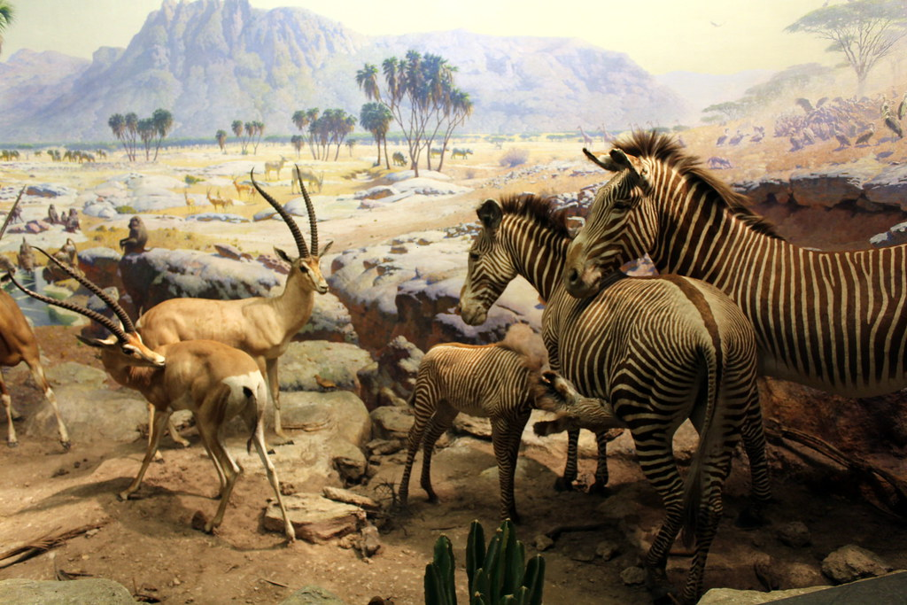 3d Exhibition Hall : Nyc amnh akeley hall of african mammals serengeti pla