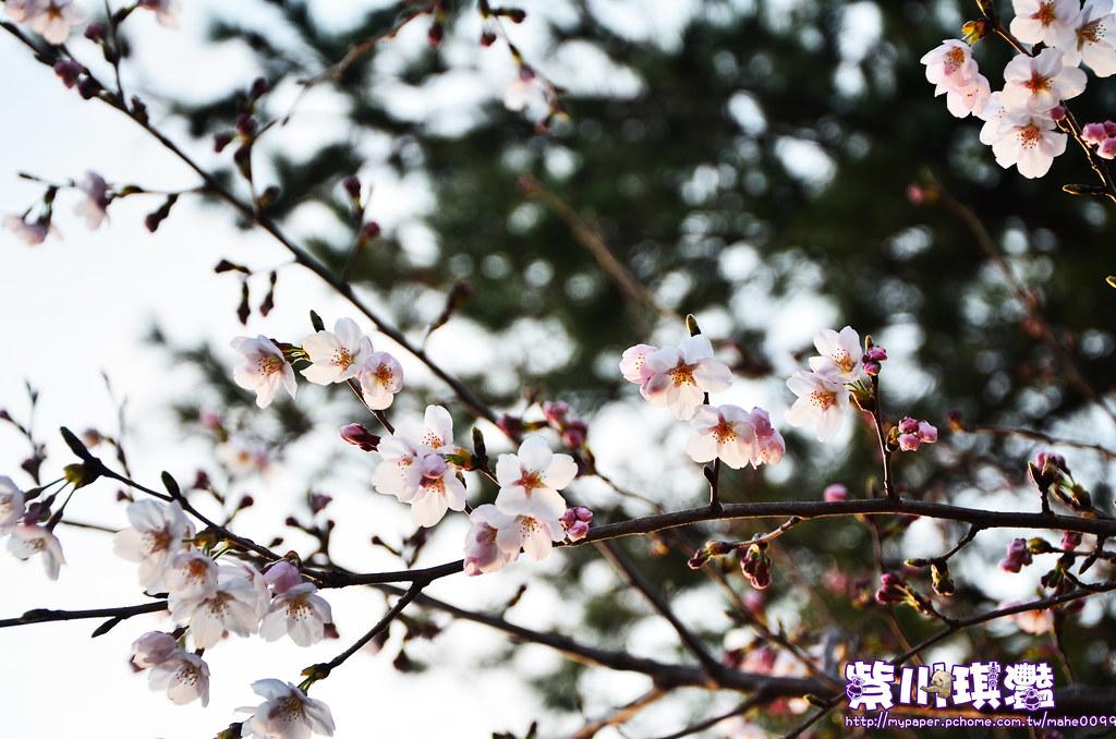 海東龍宮-006