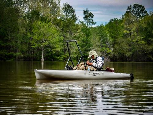Sparkleberry Swamp-59