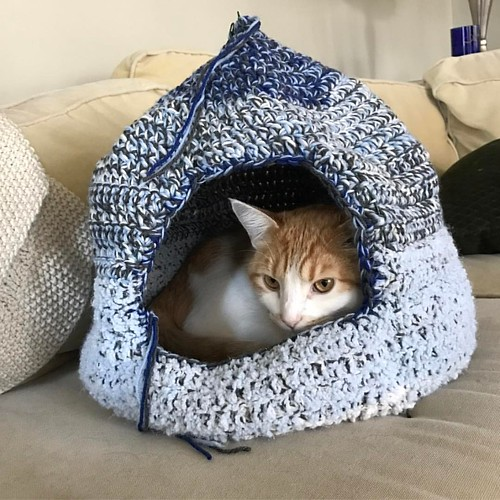 Jeff wishes everyone a happy #Caturday from his new cat cave! #jeffreylebowski #catstagram #catsofworld #catsandyarn #catsofinstagram #catcave #cathouse #catyurt #catyurtsofinstagram