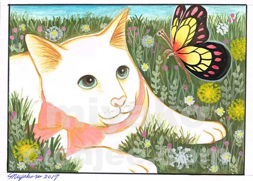 American short-hair cat with butterfly in a meadow 02