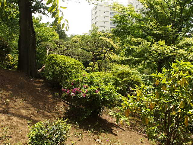 Photo for Traditional japanese garden