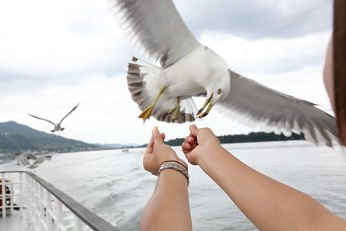 搭船餵海鷗