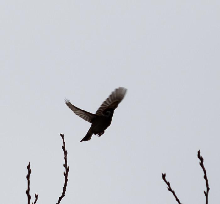 siluetti musta lintu ilmassa
