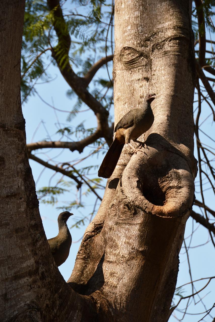 pantanalanimals13