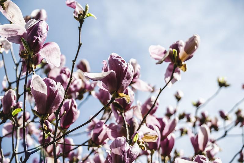Spring in Beijing