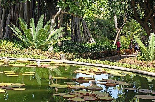 Botanical Gardens, Puerto de la Cruz, Tenerife