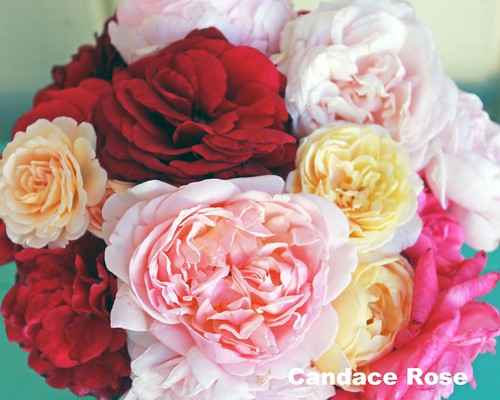 Bright garden roses 8 x 10 | by candy_rose
