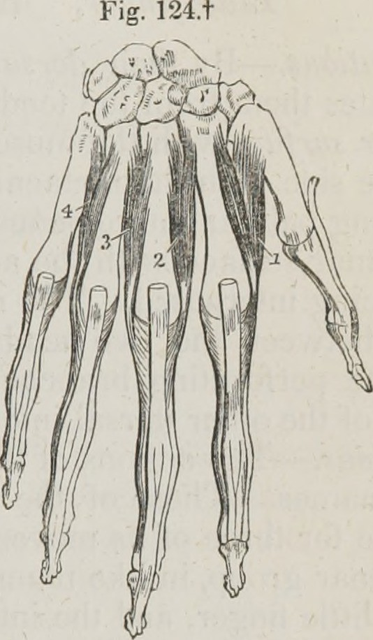 Image From Page 250 Of A System Of Human Anatomy General Flickr