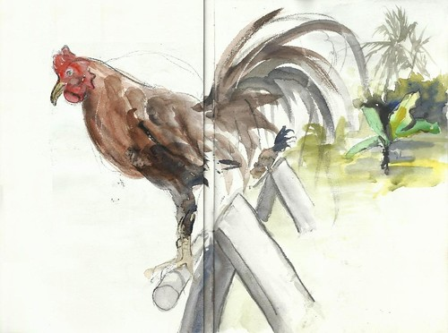 Breeding and care of the fighting cock | by Félix Tamayo