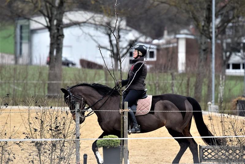 Horses 03.03 (8)