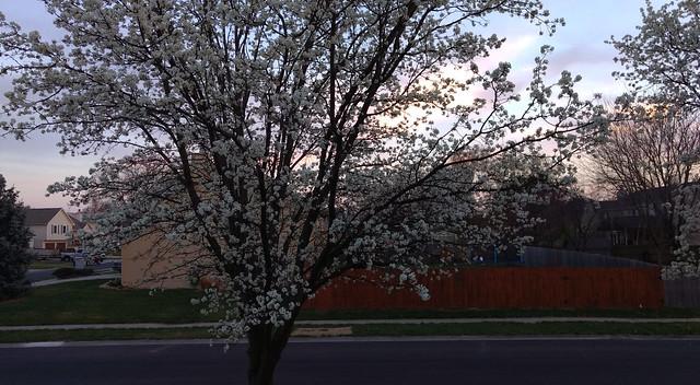 twilight_spring_detail