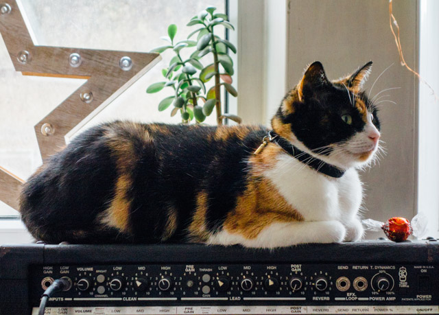 ava the cat sitting on an amp