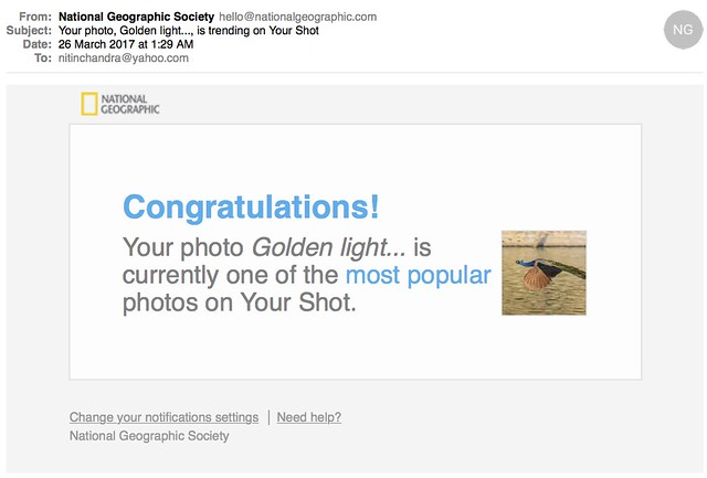 Your photo Golden light is trending on Your Shot